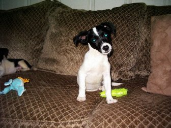 Alabama-Pet-Adoption-Interview Frank