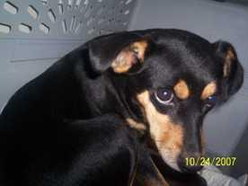 Alabama-Pet-Adoption-Interview-Momma