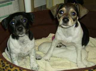 Alabama-Pet-Adoption-Interview picture 5